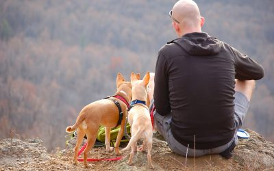 5 Must Have Items when Traveling With your Dog