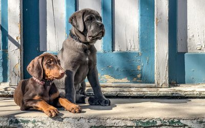 Puppy Parenting: Habits for a Long, Healthy Life